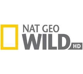 Žraločí festival na Nat Geo Wild