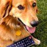 Skylink rozšíril ponuku o Mňau TV, na pozícii Skylink Ochutnávka je športový kanál