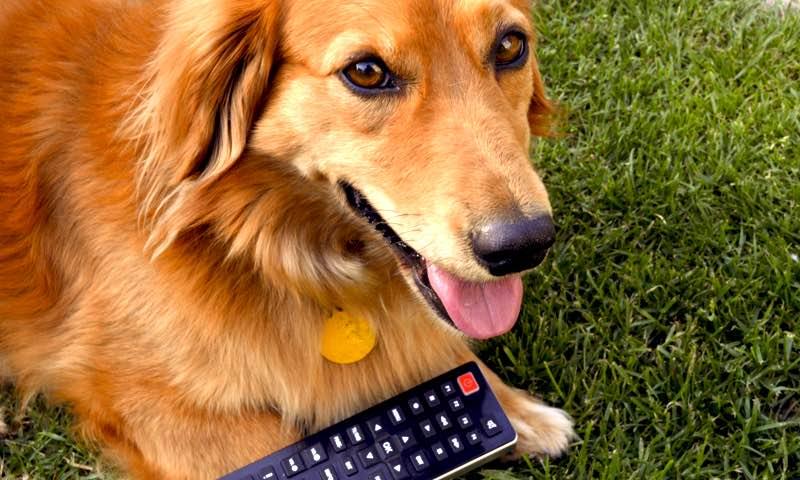 Televízne pásmo pre psov Dog TV na poľskom Animal Planet HD